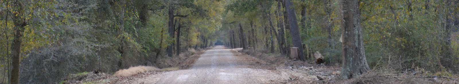 Long dirt road with trees on both sides